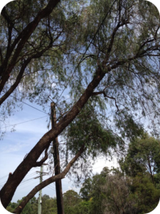 Storm damaged tree cleanup