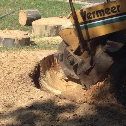 Stump Grinding Depth