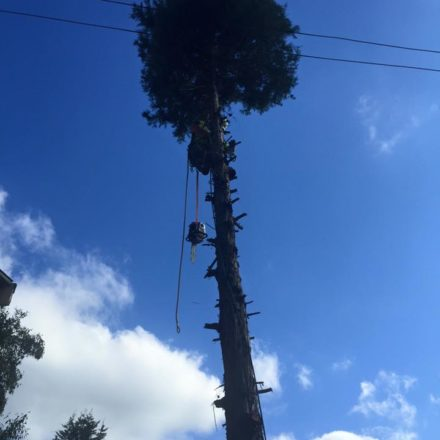 Tree removal service elevated arbor care