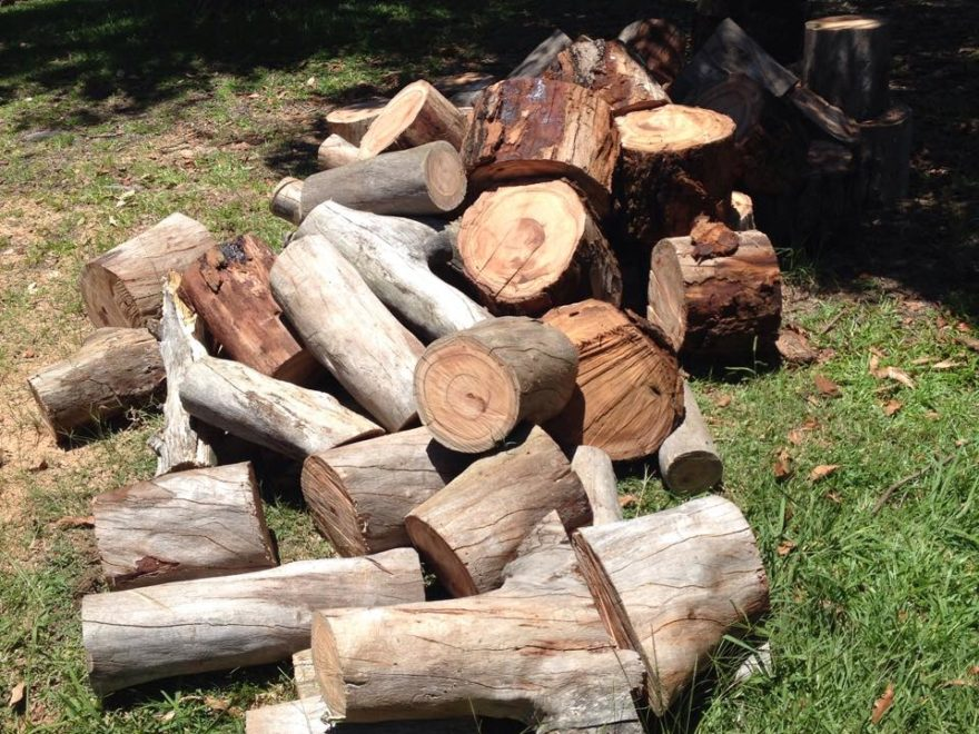 wood chipping services elevated arbor care
