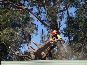 7 Things You Must Know About Tree Removal