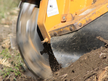 Tree Stump Removal Methods - Your Ultimate Guide