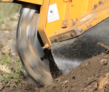 Tree Stump Removal Methods- Your Ultimate Guide