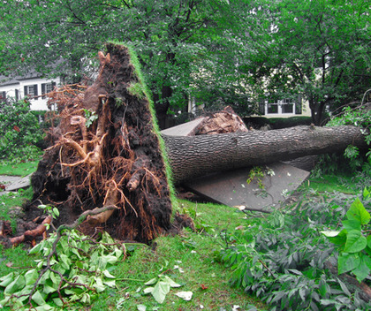 How to Remove Tree Safely & Cleanup Storm Damage