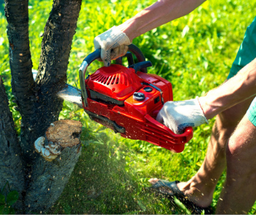 Tree Prunning Services sydney