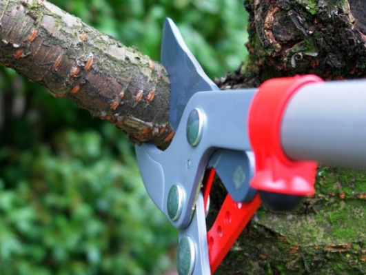 The Importance of Regular Tree Trimming and Pruning