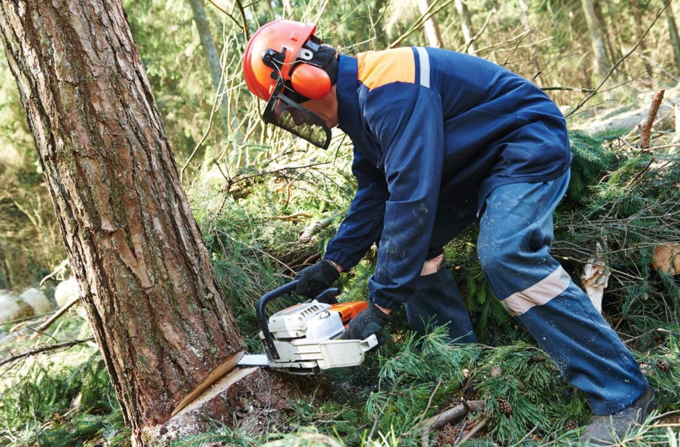 tree removal kiama
