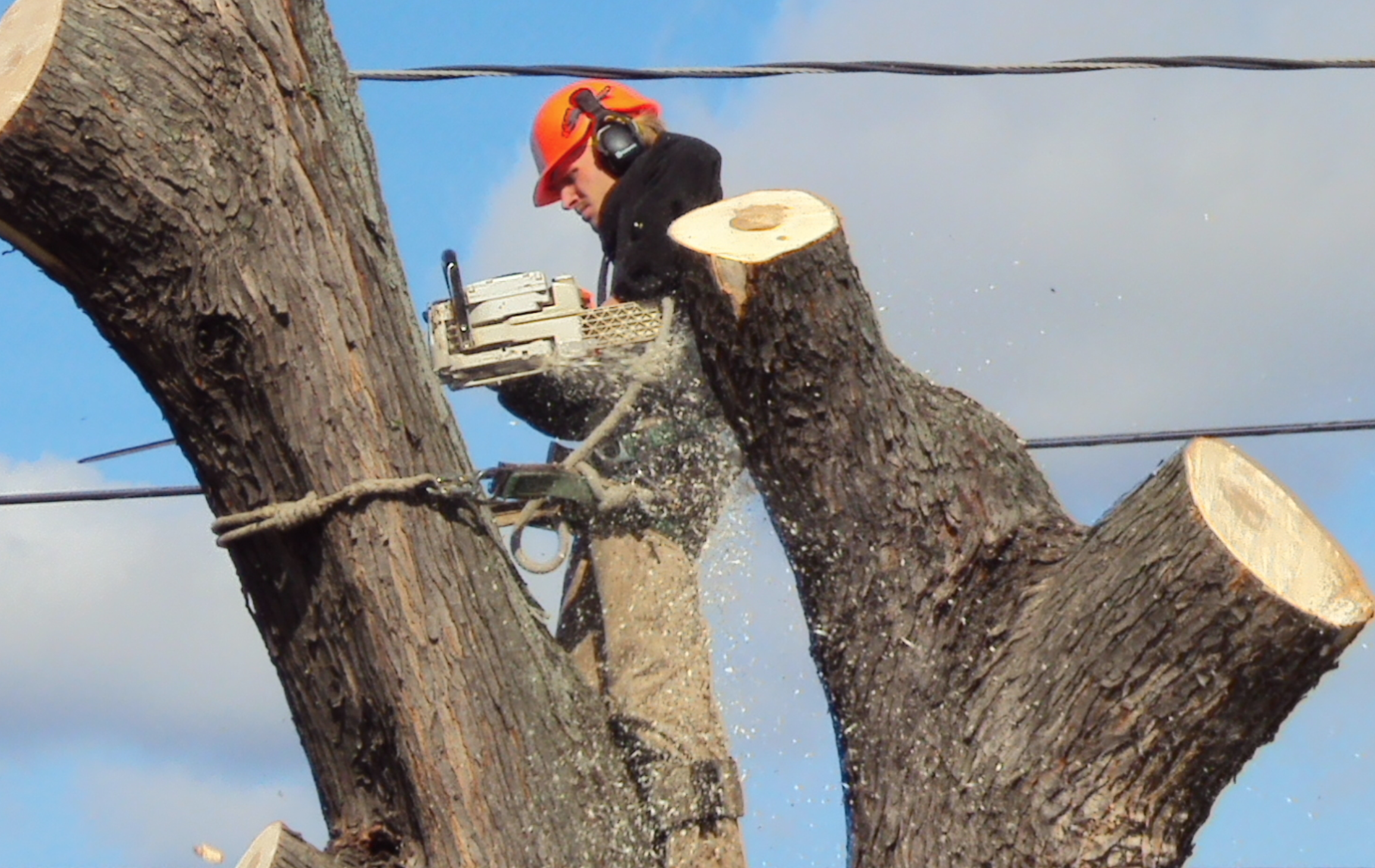 tree removal wollongong