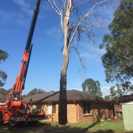 tree removal using crane