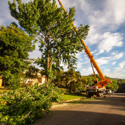 Large tree removal with crane