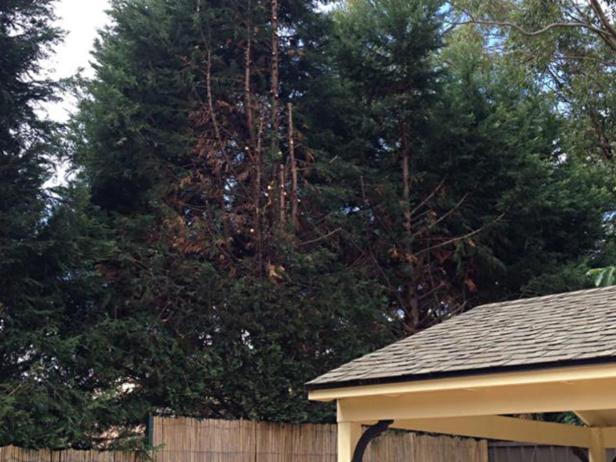 crown lifting thinning tree service penrith