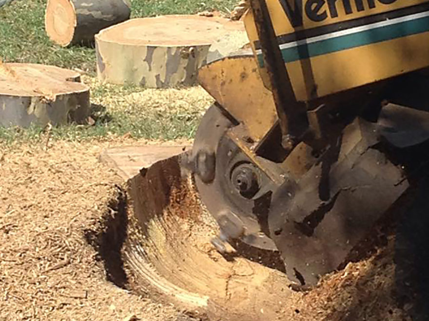 tree grinding service