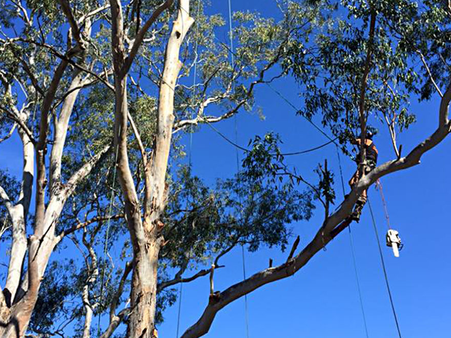 tree pruning service silverdale